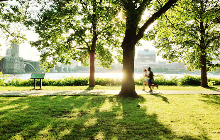 Urban green spaces, such as parks, playgrounds, and residential greenery, can promote mental and physical health